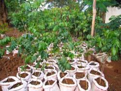 helfen kostet nix tansania dorfbewohner pflanzen b ume. Black Bedroom Furniture Sets. Home Design Ideas